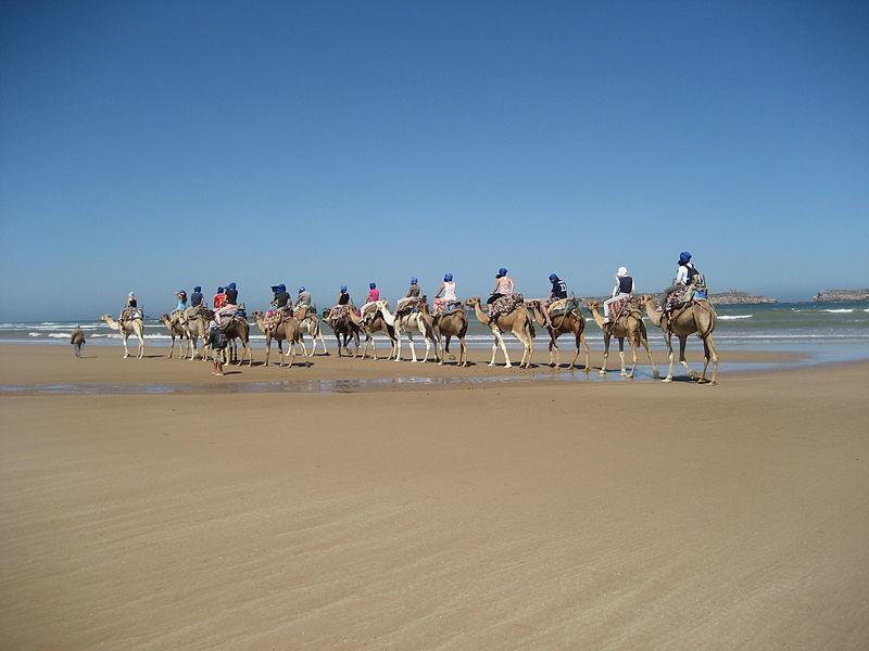Kamel-Reiten am Strand von Essaouira